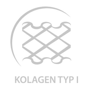KOLAGEN_TYP1.png